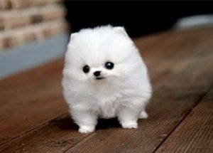 5 Heart-Warming Proofs That Puppies Make The Best Children's Gifts. Wait Till You See Video No. 3 …
