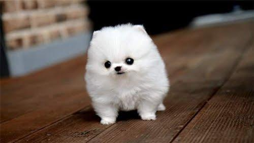cutest-puppy