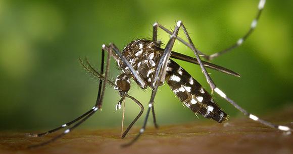 zika-virus-baby-mosquito-09